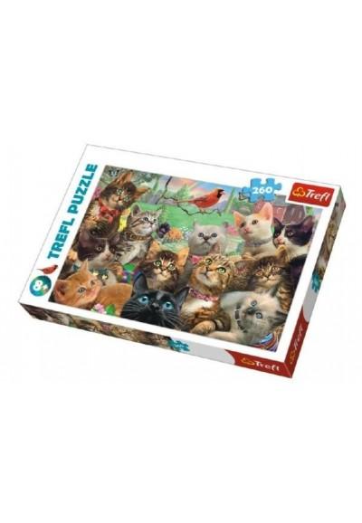 Puzzle Kočky 260 dílků 60x40cm v krabici 40x27x4cm